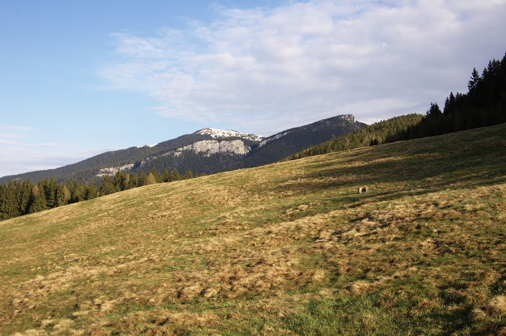 Mountain meadow under the hill foots