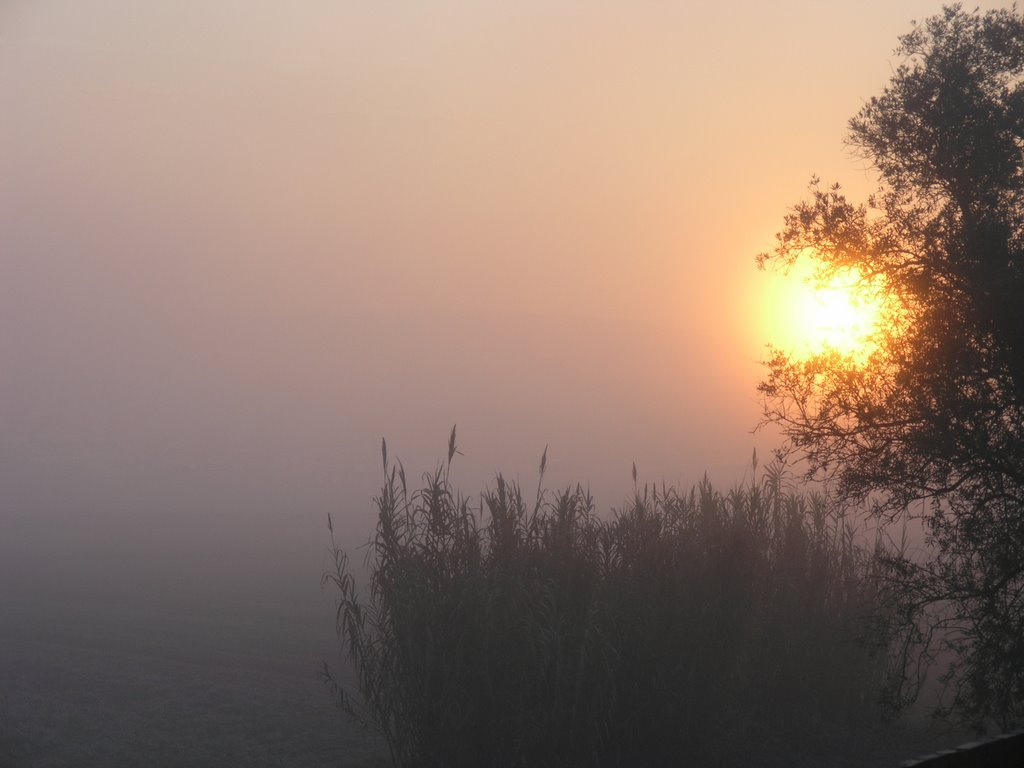 Foggy Morning in Soure. View from my window.