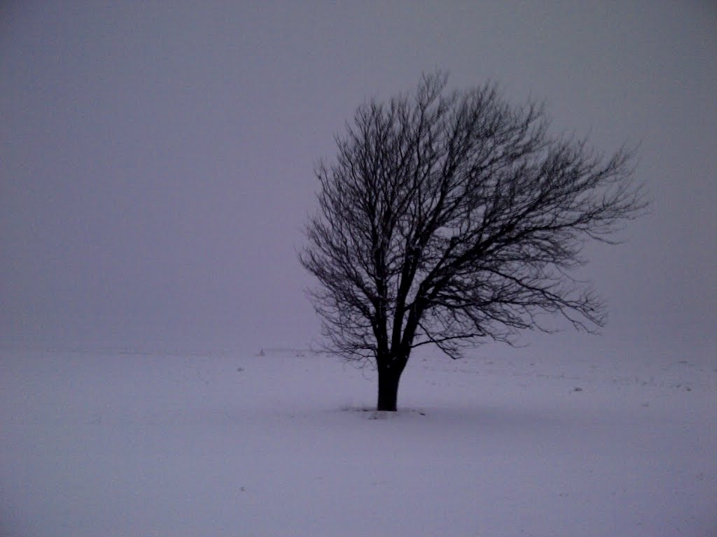 A Lone Tree in the Snow. It gets cold out here. Photo by Thomas Glumpler.