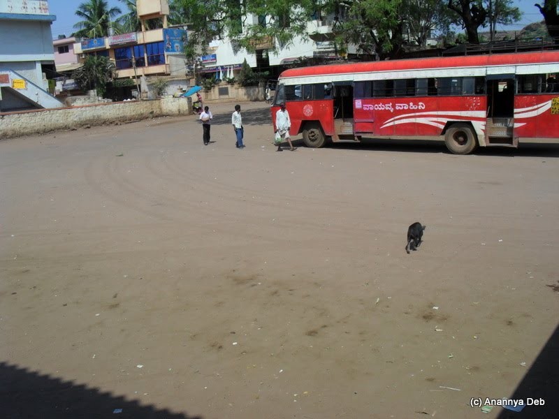 Badami bus stand, Feb 2010: Pigs roam around owning the place