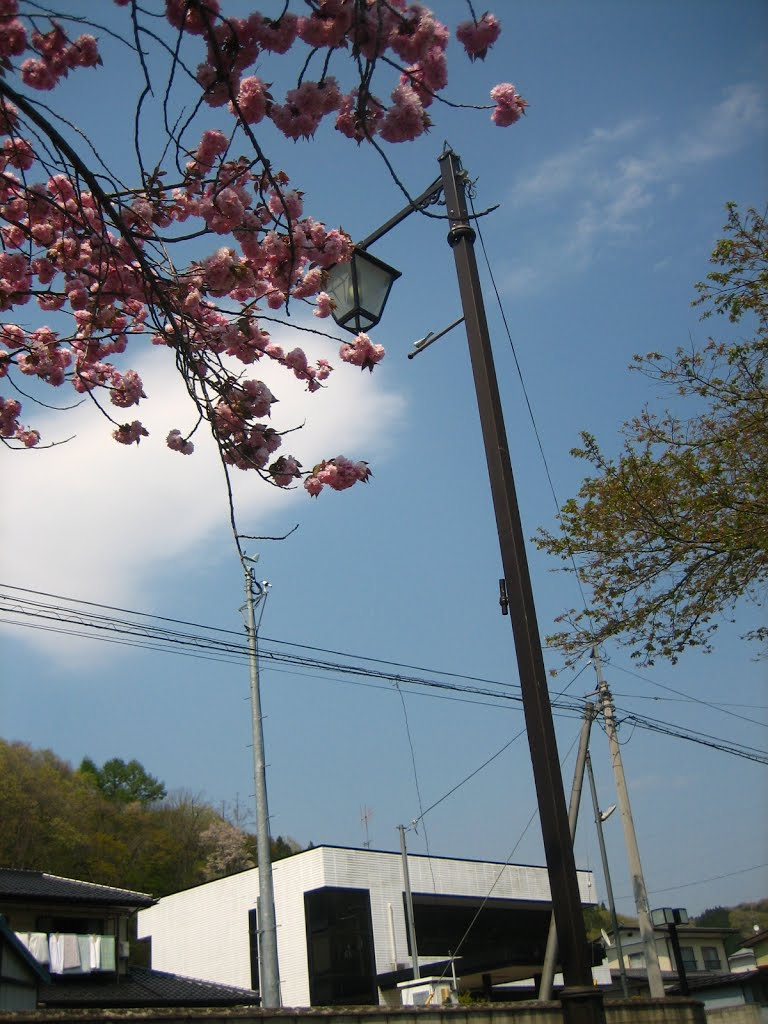 Street lamp and Double cherry blossom and cherry