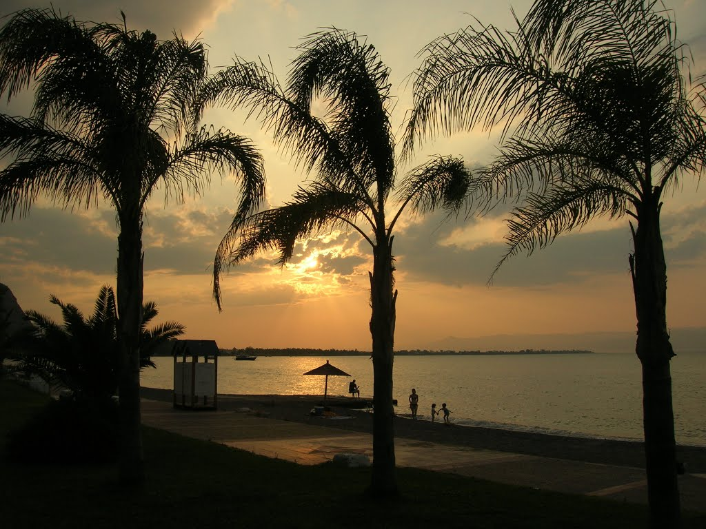 Three Palms in Sunset